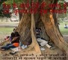 Benefits of Saving Trees in India