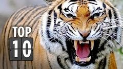 Top Ten Horrific Animal Attacks in Movies (2013) HD