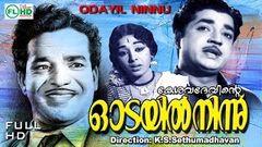Odayil Ninnu 1965   Malayalam Full Movie