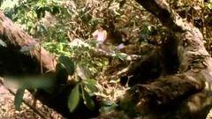 Jungle Boy 1987: Full Length Malayalam Movie