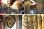 Museum of Bees, Poyales del Hoyo