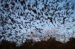 Bracken Bat Cave: Worlds Largest Bat Colony