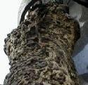 Stock im Eisen Viennas Nail Tree