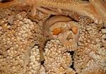 The Altamura Man
