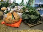 Alaska Giant Vegetables