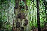 The Peculiar Burial Rites of Tana Toraja